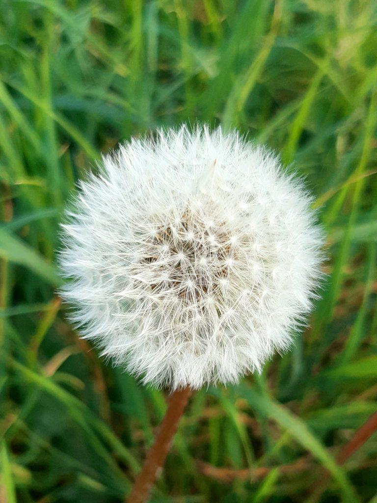 Kinship: A poem